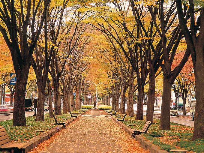⑦定禅寺通り紅葉